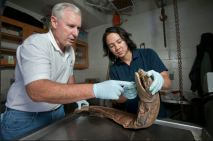 Examining Deep-sea Sharks with Dave Ebert and Paul Clerkin | Mercury News