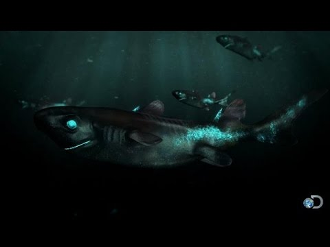 The Lantern Shark Glows in the Dark | Alien Sharks